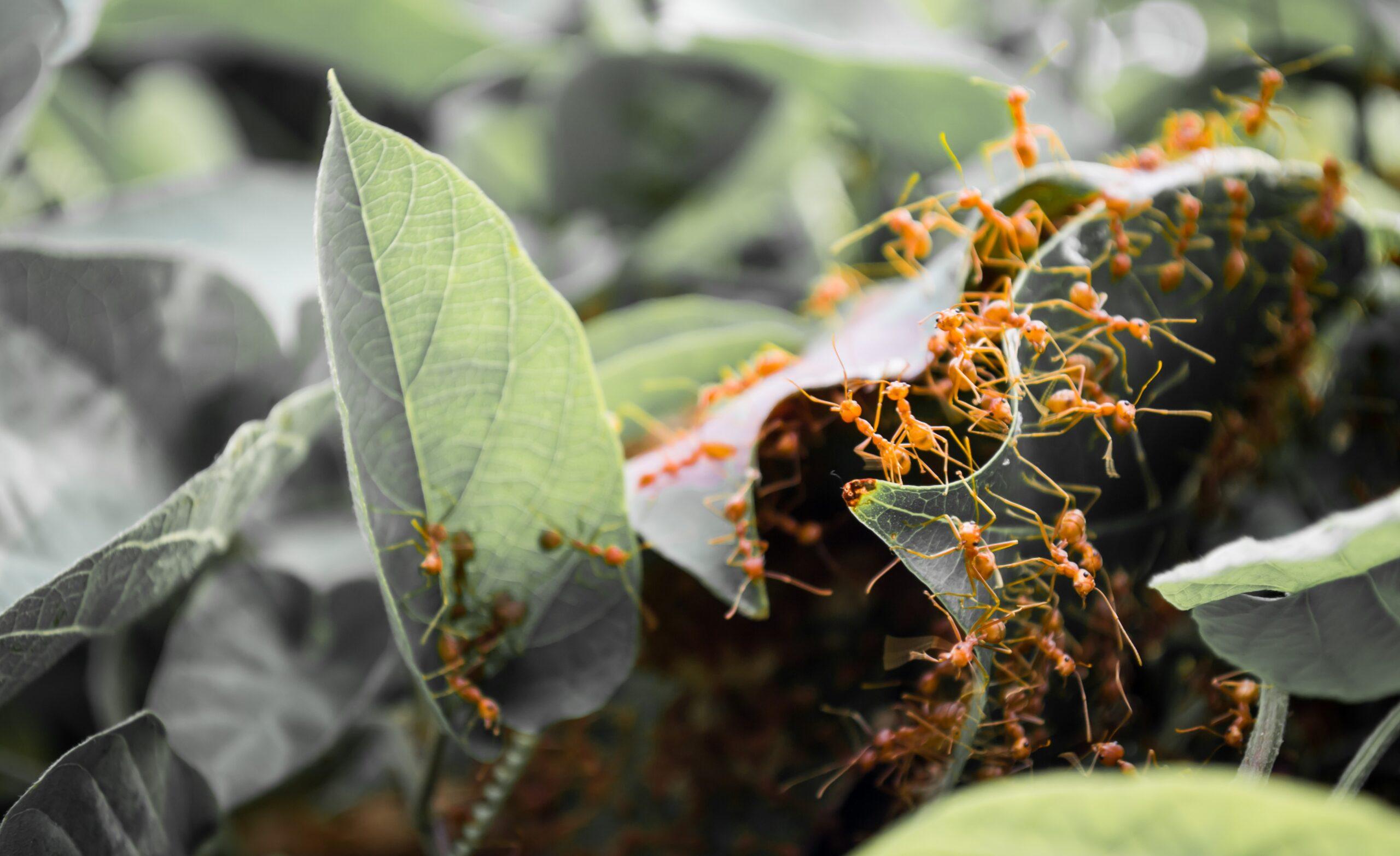 Fakta: Hmyz. Čí jed je silnější a jaká je smrt mravence?